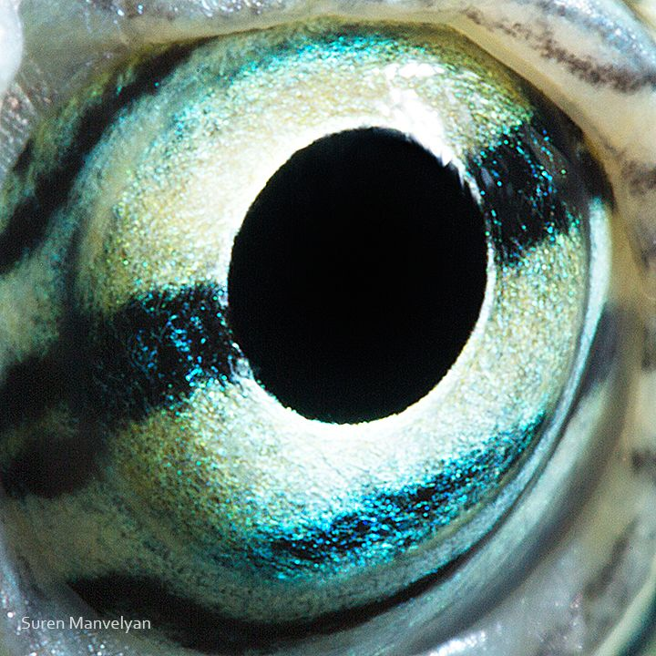 Best Eyes Images On Pinterest Beautiful Eyes Eyes And Lizards - 24 detailed close ups of animal eyes