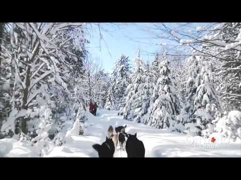 A Must-Do Adventure: Dog Sledding in Ontario | Northern Ontario Travel