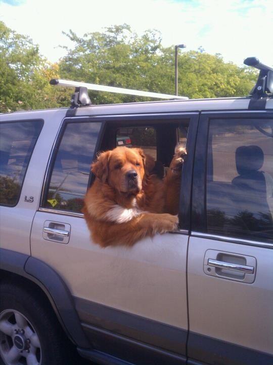 PERGUNTA 20: Onde este cão vai com tanta pressa?   27 perguntas que vão melhorar o seu dia