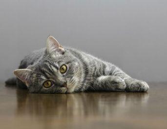Cat Throwing Up Diarrhea