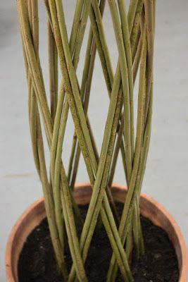 Vain tuoksua mintun ja ruusun: Ruukkupaju - Living willow pillar. / Hyvä kuvasarja ruukkupajun punonnasta.