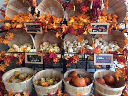 Pumpkins for sale! All kinds of pumpkins! White pumpkins, squash, gords, fall leaves    Is it fall yet? Autumn Aesthetic