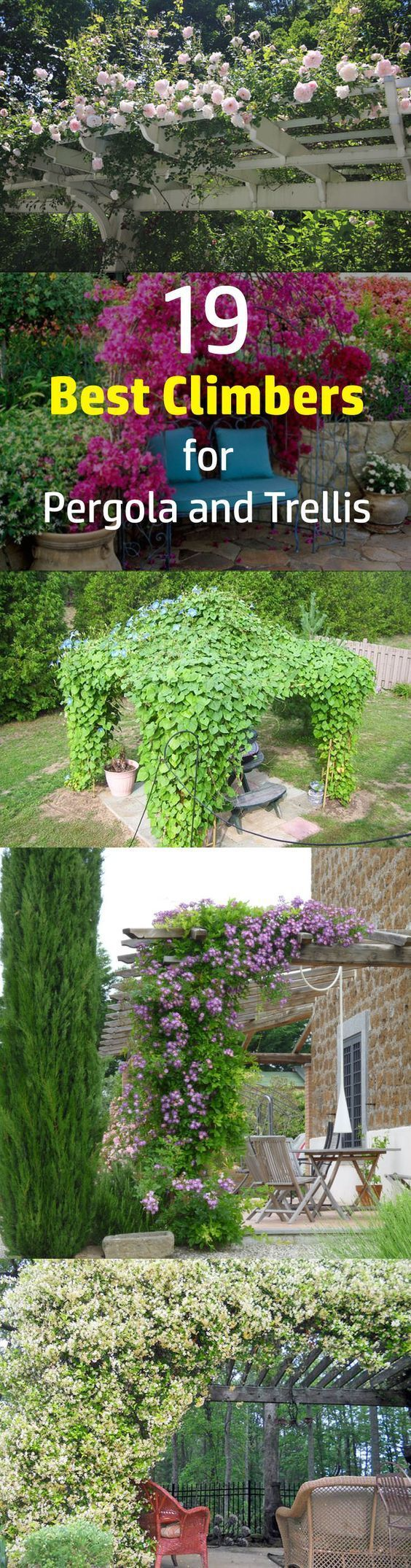 Great site. Checkout 19 best pergola plants for your garden. These climbing plants for pergolas and arbors can also be grown in small gardens easily