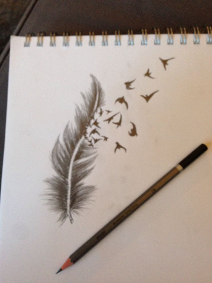 Plume dessin   Feather birds drawing (Cyril)