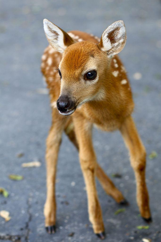 Seid gut zu Tieren, denn diese wirken nicht nur für die Mutter, sondern auch auf uns Menschen schutzbedürftig! Hier ein Hirschbaby aus Ashland, Oregon