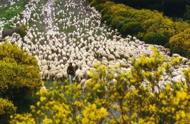WWF España - Ganadería extensiva y trashumancia contra las llamas