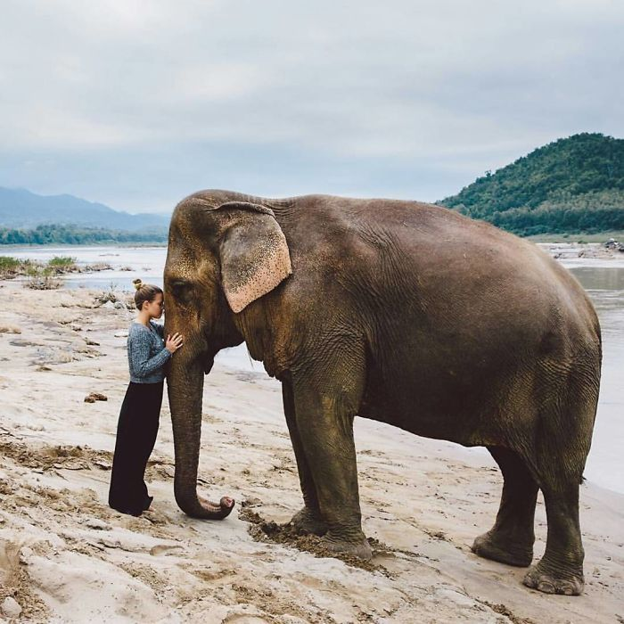 Face To Face With This Majestic Creature, A Rescued 38 Years Old Asian Elephant Moukhao