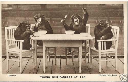 1000+ images about Chimps Tea Party on Pinterest | Parks, Tea parties and London