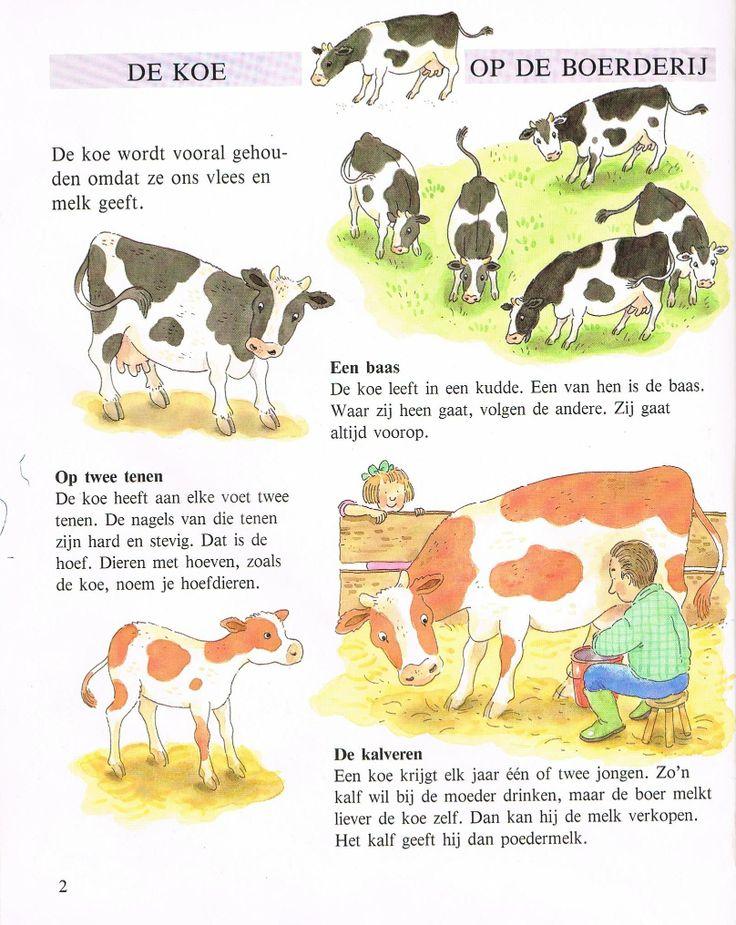 info over de koe 1