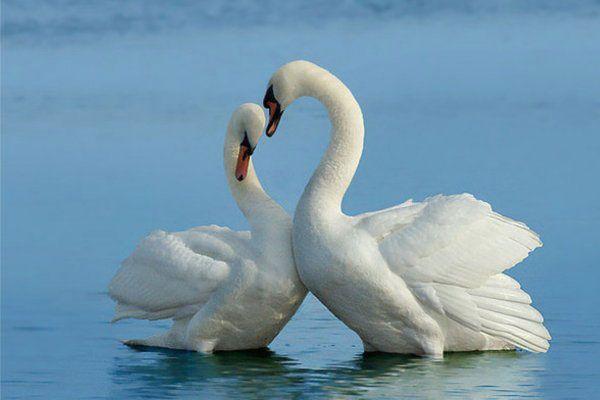 Интересные факты о символах любви. Обсуждение на LiveInternet - Российский Сервис Онлайн-Дневников