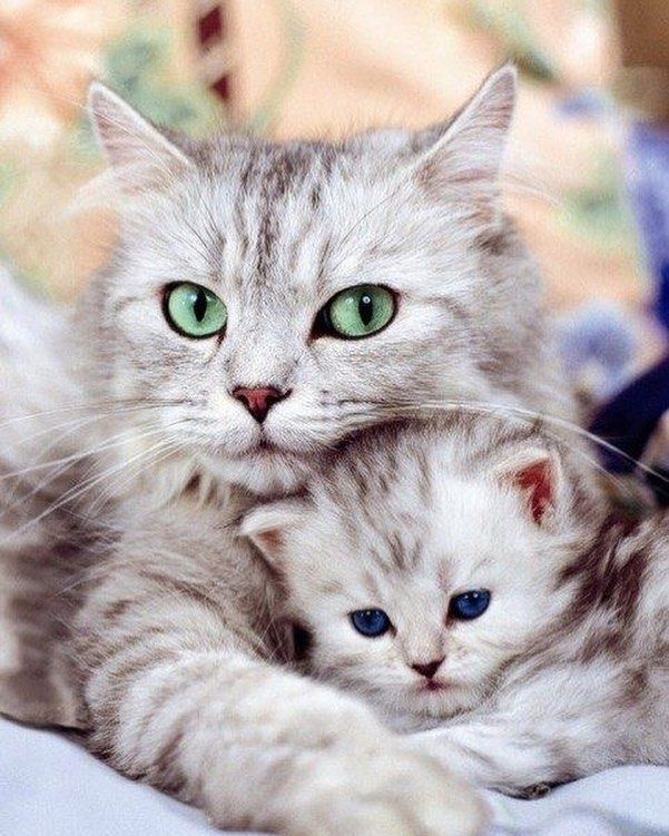 A Imagem Pode Conter Gato In 2020 Cute Kittens Sopoja Elaimia Animales
