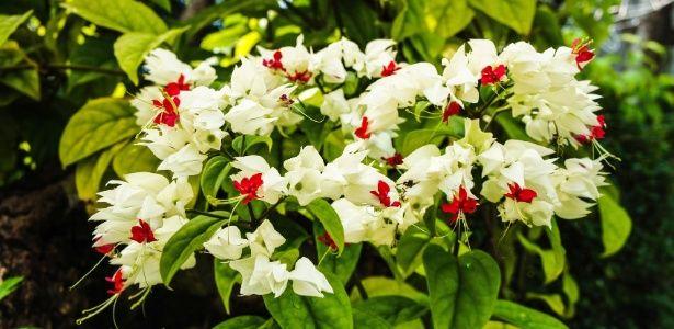 Trepadeiras vigorosas ou delicadas para serem cultivadas em casa, sem susto