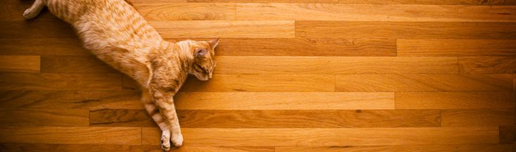 How to get cat pee smell out of hardwood floors.