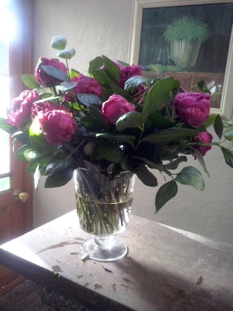 It is that very special 3 weeks of the year - time for magical peonies