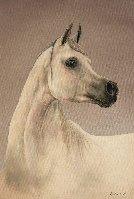 Arabian horse soft pastel