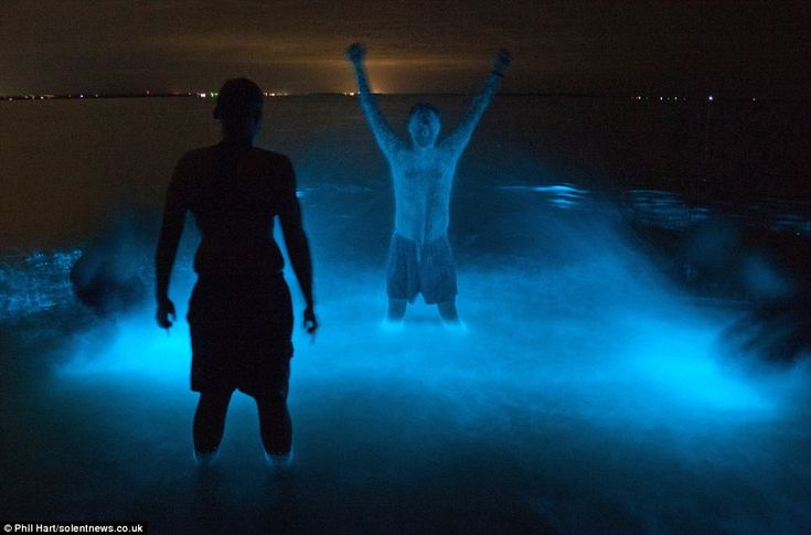 Phil Hart has managed to capture on camera a bizarre phenomenon that has turned the water in an Australian lake a fluorescent shade of blue.    Swimmers who took a midnight dip in the lake in Victoria also appeared to glow in the dark thanks to a chemical reaction called bioluminescence, which happens when a naturally-occurring micro-organism in the water is disturbed.