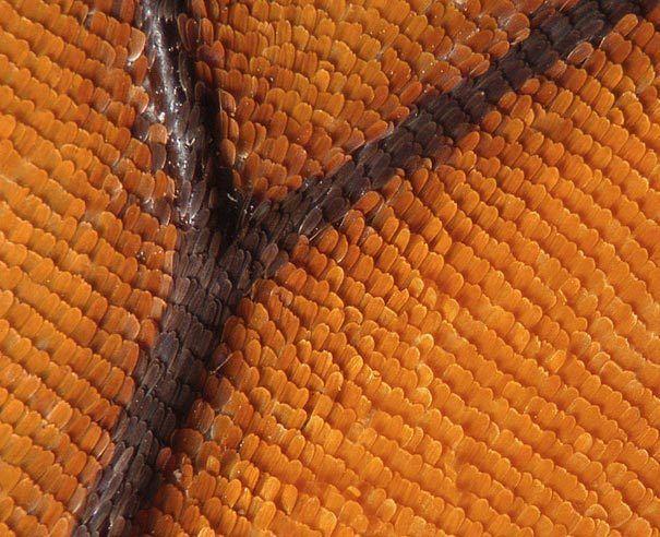 Fotografías tomadas por unmicroscopio electrónico que nos permite verpartículasque serían imposible ver a simple vista, permite ver las alas de una mariposa