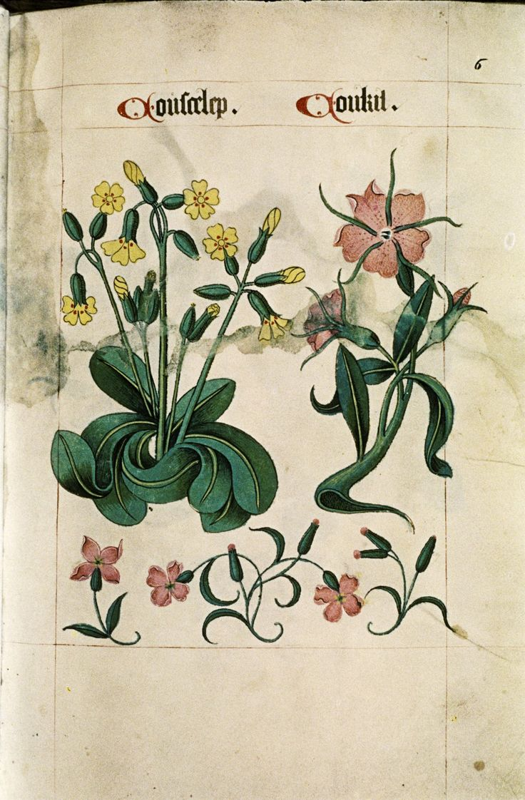105 best tudor pattern book images on pinterest embroidery tudor herbal i 1520 i henry viii was a dedicated apothecary i he loved to make his own medicines and unguents i he also had a book of recipes for medicines bankloansurffo Image collections