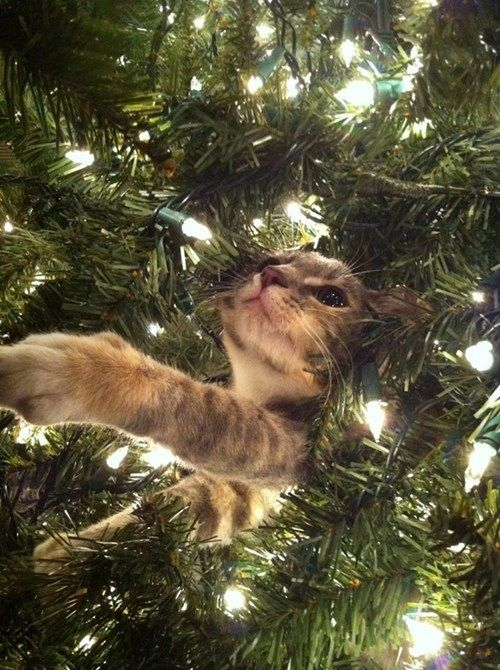 Kitty messing with the Christmas Tree!