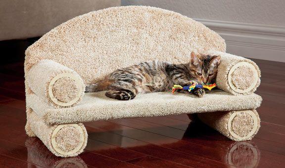 sofá gato