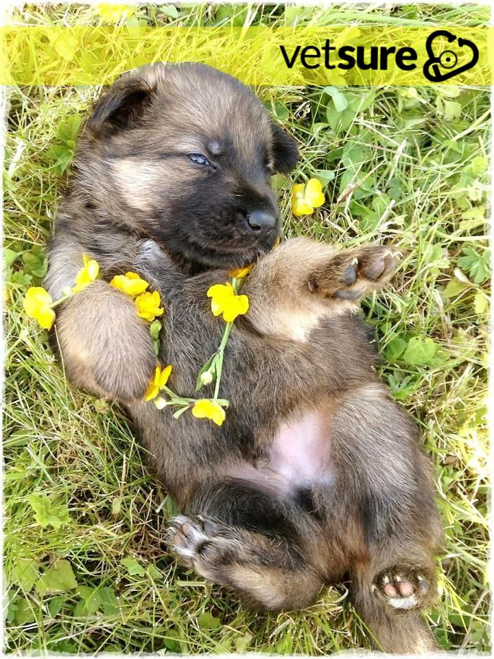 Who S Ready To Roll Around In The Grass In This Beautiful Weekend Weather Fridayfeeling Fridayfun Sunshine Cat Insurance Dog Insurance Dogs