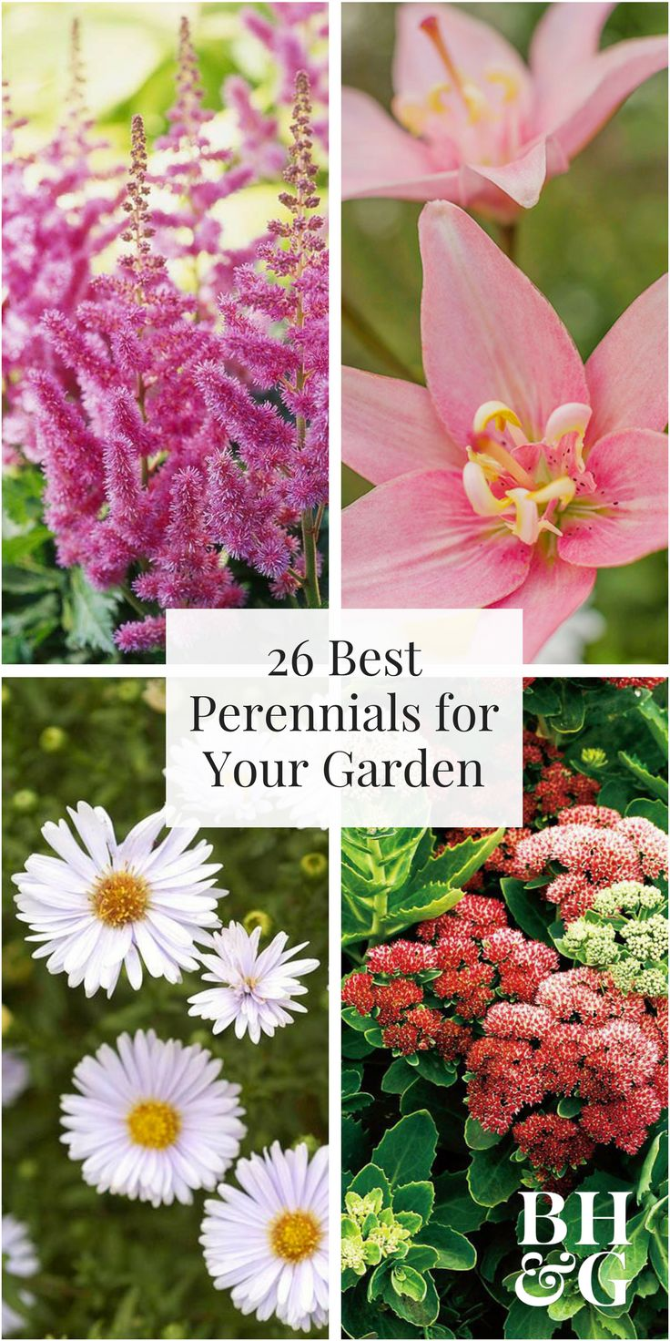 Top 20 Perennials for Your Garden 3844