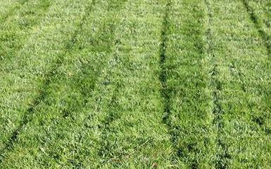 organic lawn care Organic approach lawn care services featuring natural lawn fertilizers and premium grass seed. Lawn Science program start with a soil test from UCONN soil test labs. https://www.lawnscience.com/2017/08/20/tolland-lawn-care-summer/