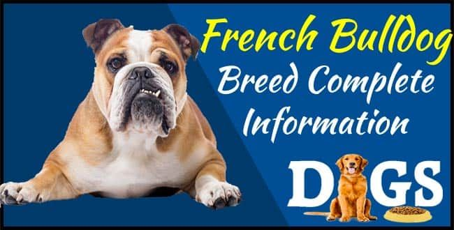 French Bulldog Breed Complete Information Dogs Fud Dogs Dogs