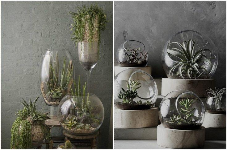 Красивые композиции из растений во флорариумах