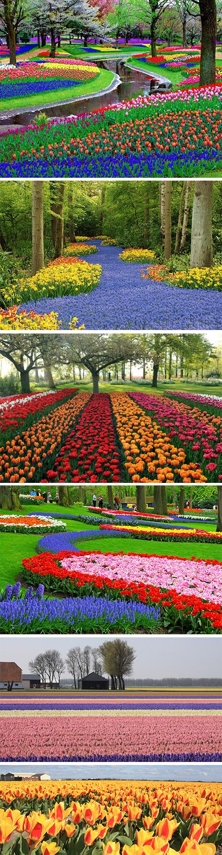Keukenhof -largest flower garden in Europe-, Netherlands