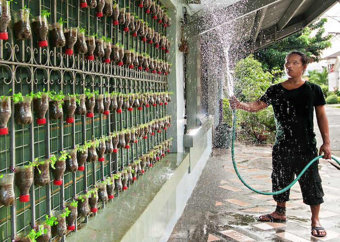 Urban gardening using plastic bottles on fencing to grow - Home landscape design philippines ...