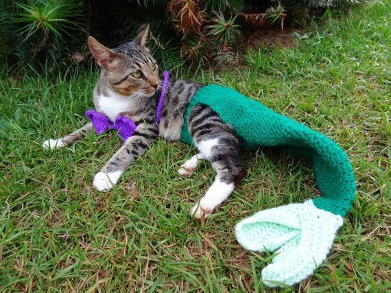 Cat Mermaid Costume- because every cat will love lounging around in a fish tail that it can't eat.