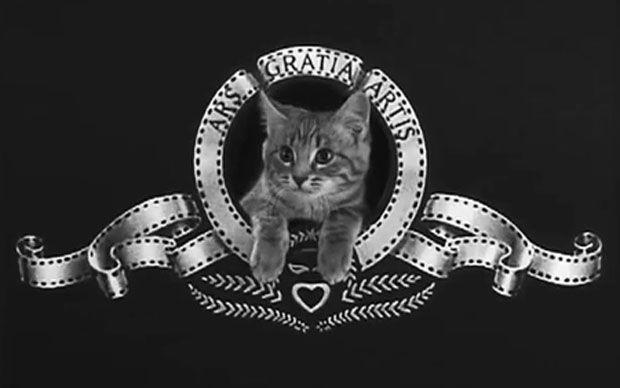 Best viral cat videos celebrated at US festival - Telegraph