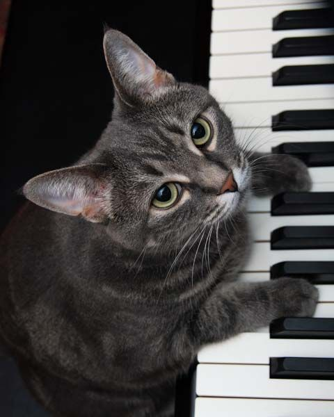 """""""Nora The Piano Cat"""" © by Burnell Yow! -  Nora was rescued from the streets of Camden, NJ. We adopted her through the shelter Furrever Friends. She was named for the surrealist artist Leonora Carrington, but her talent lies in music - the piano to be exact. Her videos have had over 30 million hits on YouTube, and she's been featured in various media around the world. Needless to say, she's our most famous cat - even more famous than I am. - http://norathepianocat.com/image-gallery/"""
