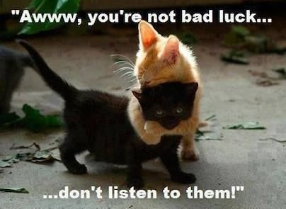 cute animals quotes - Google Search