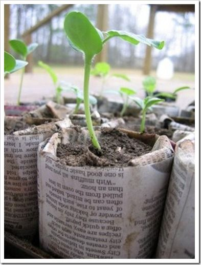 Keep your plants cozy with recycled newspaper plant pots!