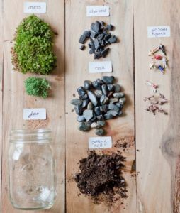 A terrarium is the perfect accent piece when you want to add a natural touch to your interior décor. Terrariums are small enough to sit on a desk or table