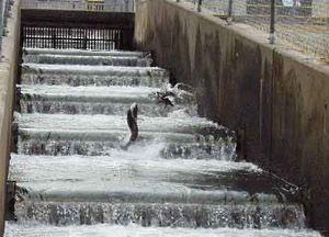 Nimbus Fish Hatchery  Salmon and Steelhead jump up the fish ladder every November.  Bring nickels to feed baby fish in the holding tanks year round.