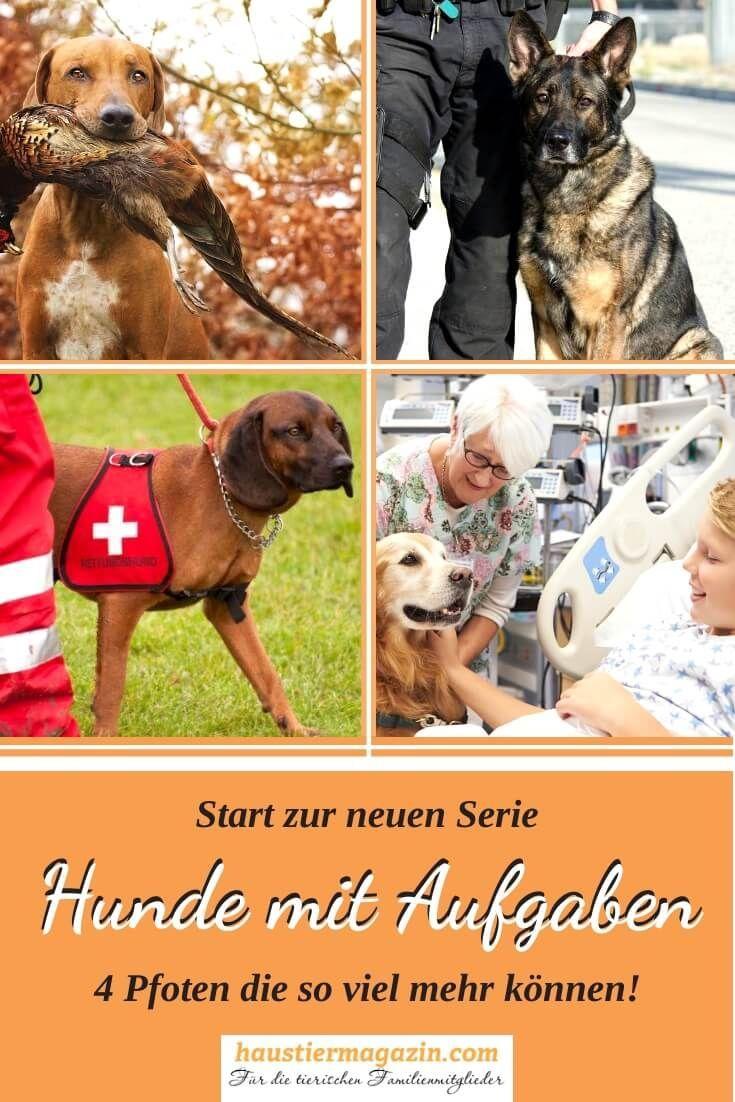 Hunde Mit Aufgaben Eine Ubersicht Hunde Arbeitshunde Und