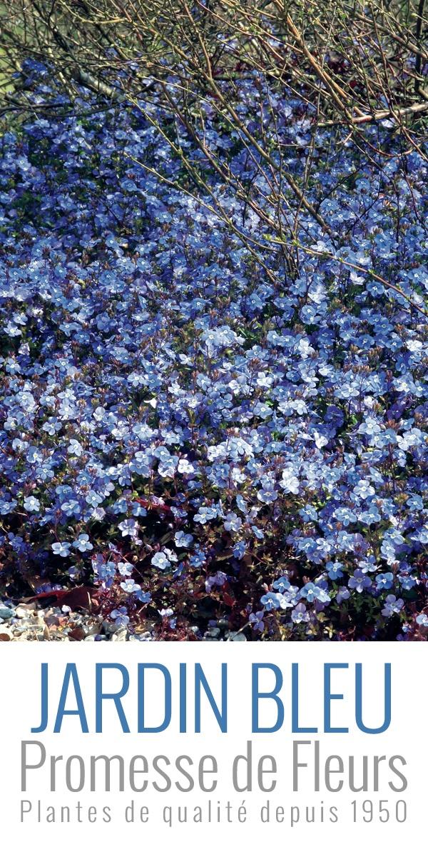 Veronica umbrosa 'Georgia Blue' - Véronique bleu gentiane à (re)découvrir tout de suite sur notre site Promesse de Fleurs !! http://www.promessedefleurs.com/vivaces/vivaces-par-variete/veronique/veronique-veronica-umbrosa-georgia-blue-p-3854.html