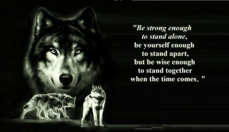 Cool Wolf Sayings | animal black, pack, the pack, wolves, quotes, white, timber, lone wolf ...