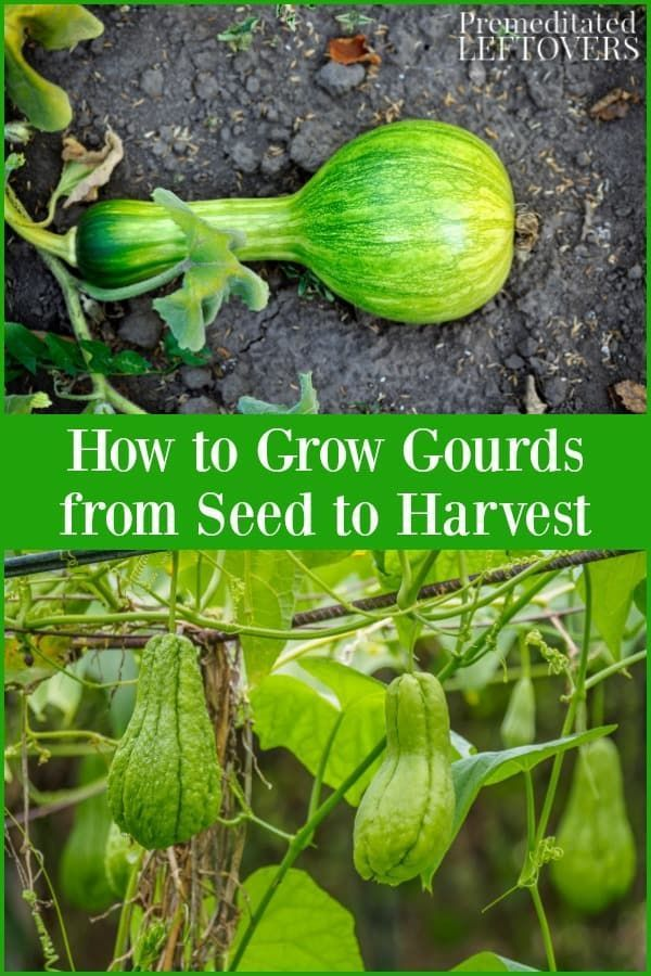 Are you thinking of growing your own pumpkins? This guide on how to grow pumpkins   – Diy Garden Art
