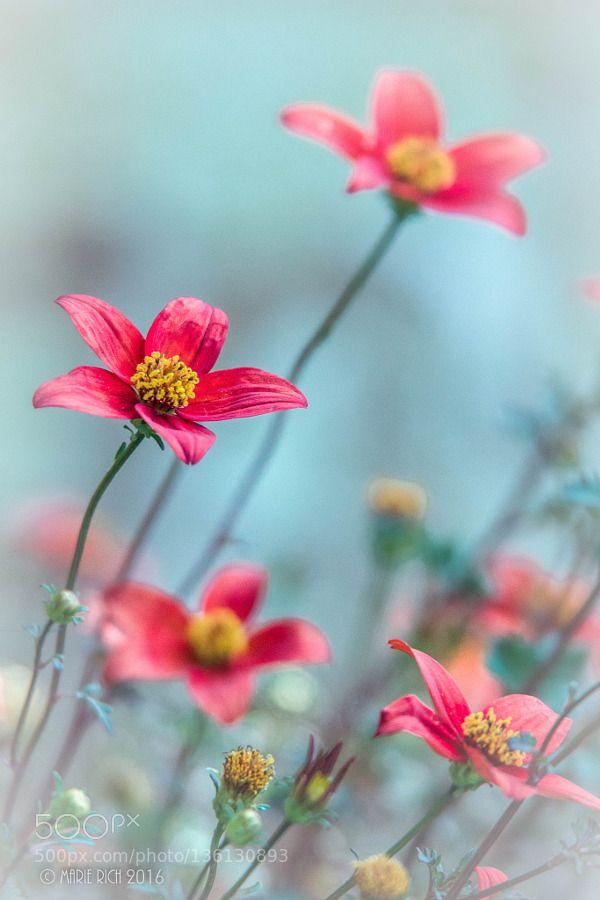 500 best Blumen images on Pinterest Flower power, Paisajes and Plants