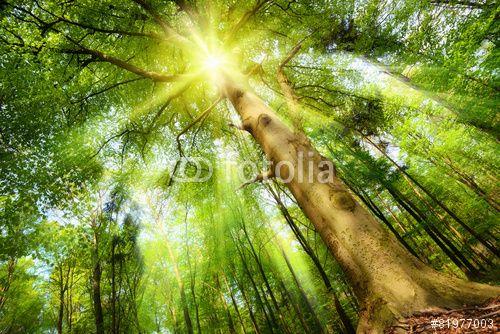 """Descargue la foto libre de derechos """"Sonne im Zauberwald"""" creada por Smileus al precio más bajo en Fotolia.com. Explore nuestro económico banco de imágenes para encontrar la foto perfecta para sus proyectos de marketing."""