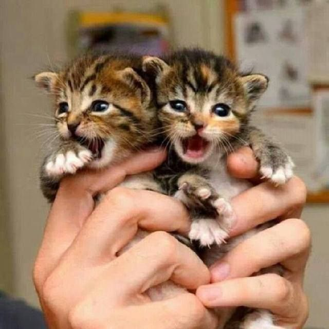Awww....teeny tiny kittens !!                                                                                                                                                      More