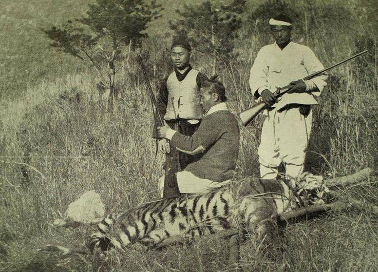 Tiger hunting in Jindo-islands at Joseon-Dynasity