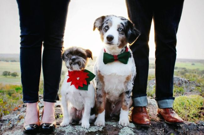 holiday photo with dogs for Christmas card #dogs #photography #nature