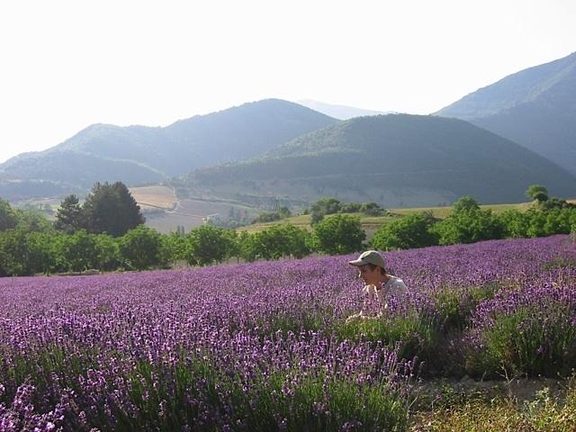 Faire corps avec une couleur, un parfum de lavande, un paysage drômois ; s'en imprégner jusqu'à l'ivresse...