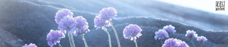 Supermüzz - Freebook: Kindermütze / Wendemütze für warme Ohren nähen - lila wie liebe -