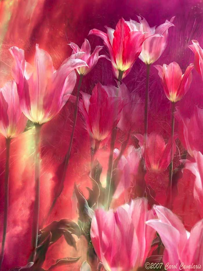 Language Of Flowers Series: Tall Tulips Flowers Digital Art Painting